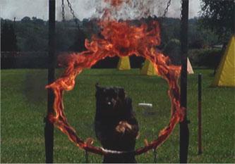 1-gsd-fire-hoop