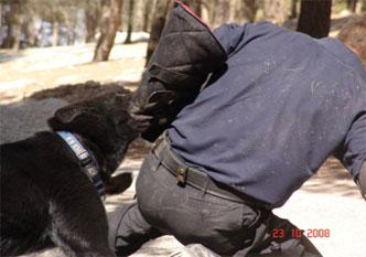 14-attack-dog-training
