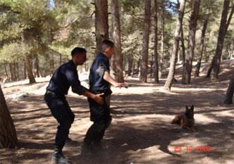 15-patrol-dog-discipline