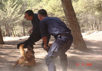 21-attack-dog-seize