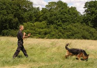 3-gsd-tracker-dog