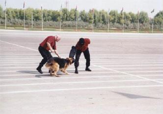 30-dubai-security-demo-dog