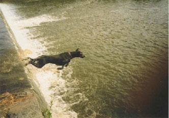 31-dobermann-water-jump