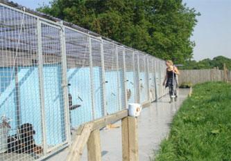 4-top-dog-kennels