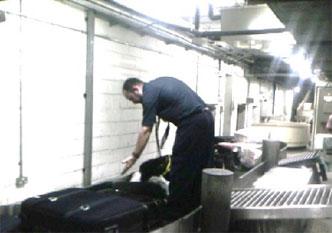 60-labrador-luggage-search