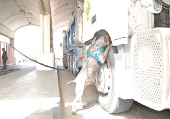 77-drugs-explosives-search-dog