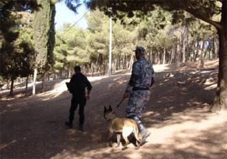 78-handler-security-dog-training