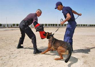 84-bahrain-k9-bite-training