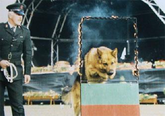 88-security-dog-show